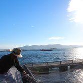 朝まずめ、会場イケスで魚釣り
